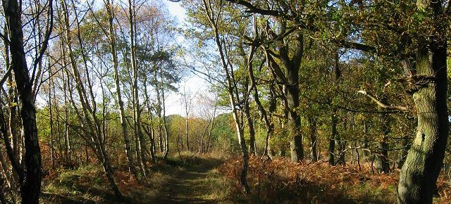 Saltoun Woods  Saturday 24 November 2018