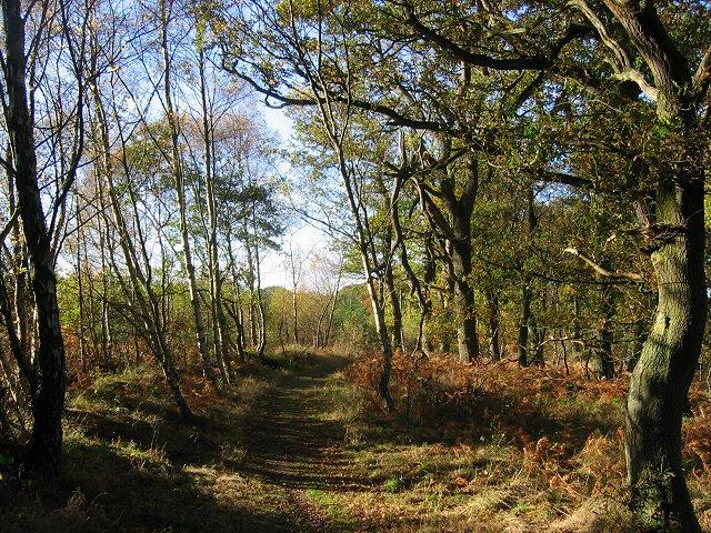 Saltoun Big Wood