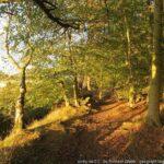 Butterdean Wood  Saturday 24th April 2021
