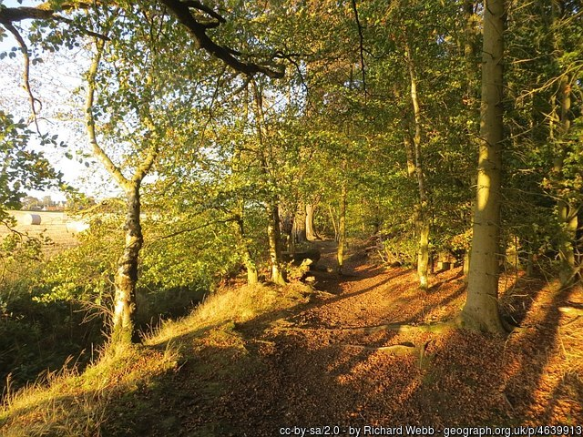Butterdean Woods  Saturday 25th November 2017