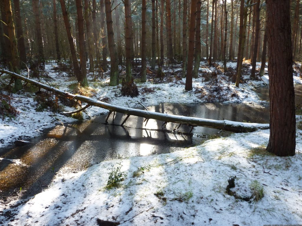 Festive Frolic: John Muir Country Park  Saturday 28 December 2019