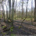 Lochend Woods, Dunbar  Saturday 28 September 2019