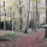 SoSOL: Duns Wood  Sunday 24 November 2019