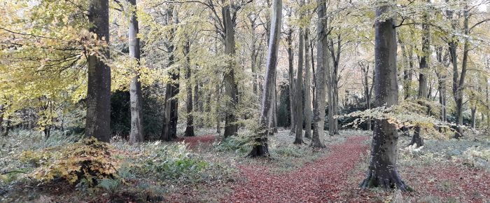 SoSOL: Duns Wood  Sunday 24 November 2019