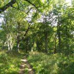 Saltoun Big Wood  Saturday 26 September 2020