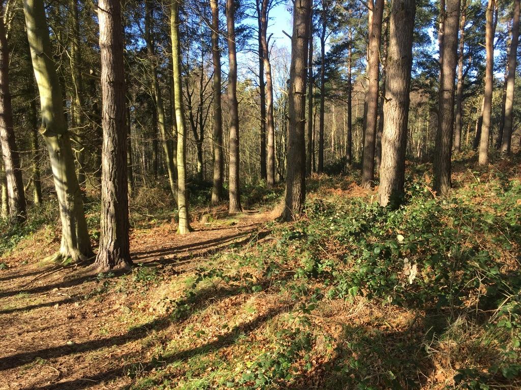 Binning Wood