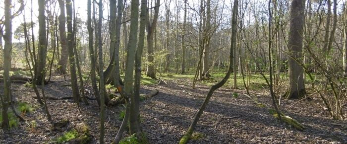Lochend Woods, Dunbar  30 October 2021